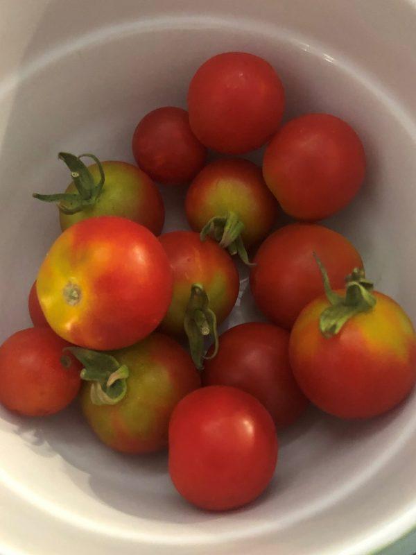 Cherry rajčice